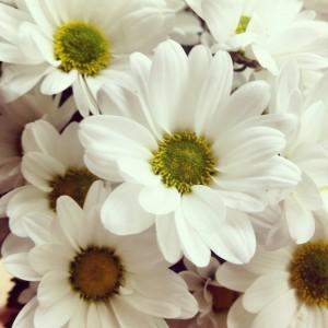 New mummy blog white flowers mysundayphoto