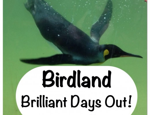 Birdland Bourton on the Water Gloucestershire family days out