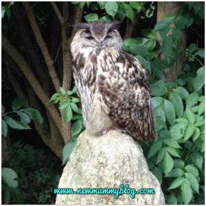 Birdland owl