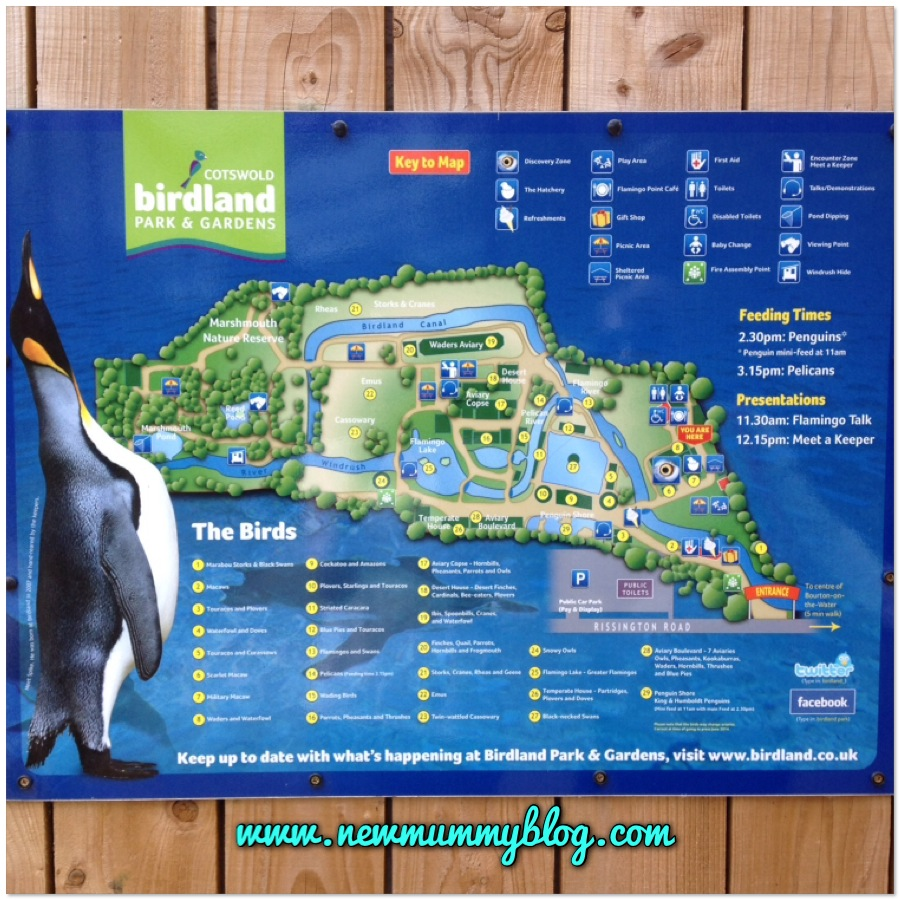 Birdland 9 acres of fun for kids and toddlers