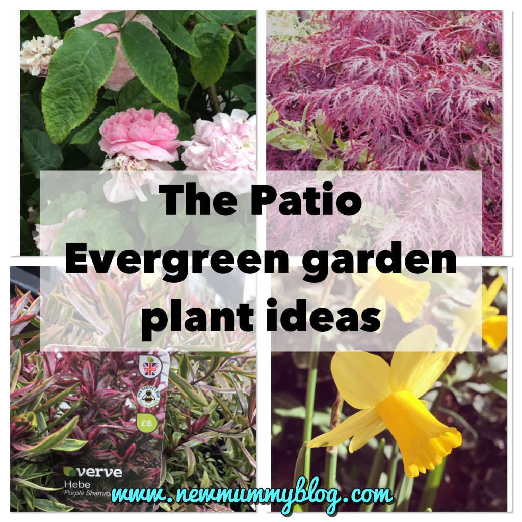 Evergreen border plant ideas | Garden plant ideas - 1 - New Mummy Blog