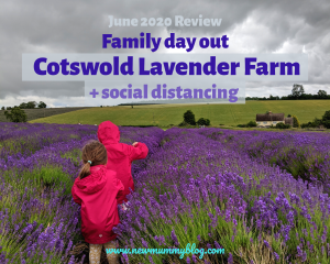 Cotswold Lavender fields family day out social distancing safe Worcestershire near Cheltenham June 2020