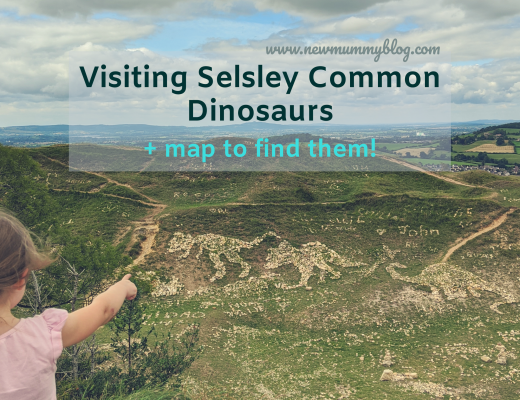 Selsley Common Dinosaurs and where to find them when you visit