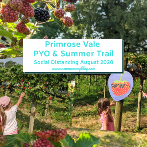 Primrose Vale summer trail and pick your own strawberries review post lockdown