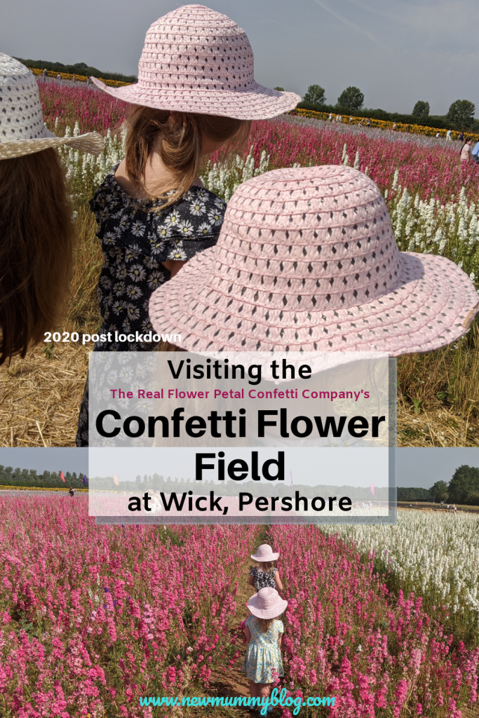 Visiting the Confetti Flower Field, Wick, Pershore, Worcestershire near Evesham. August 2020 with social distancing post lockdown.