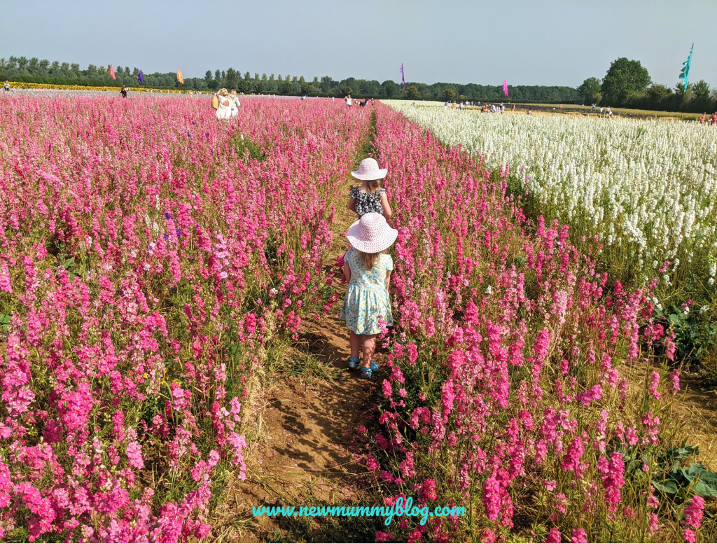 Visiting the Confetti Flower Field, Wick, Pershore, Worcestershire near Evesham. August 2020 social distancing post lockdown. Pink and white delphiniums with daughters