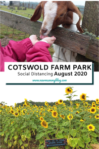 Cotswold Farm Park fun day out near Cheltenham with Sunflower field in August!