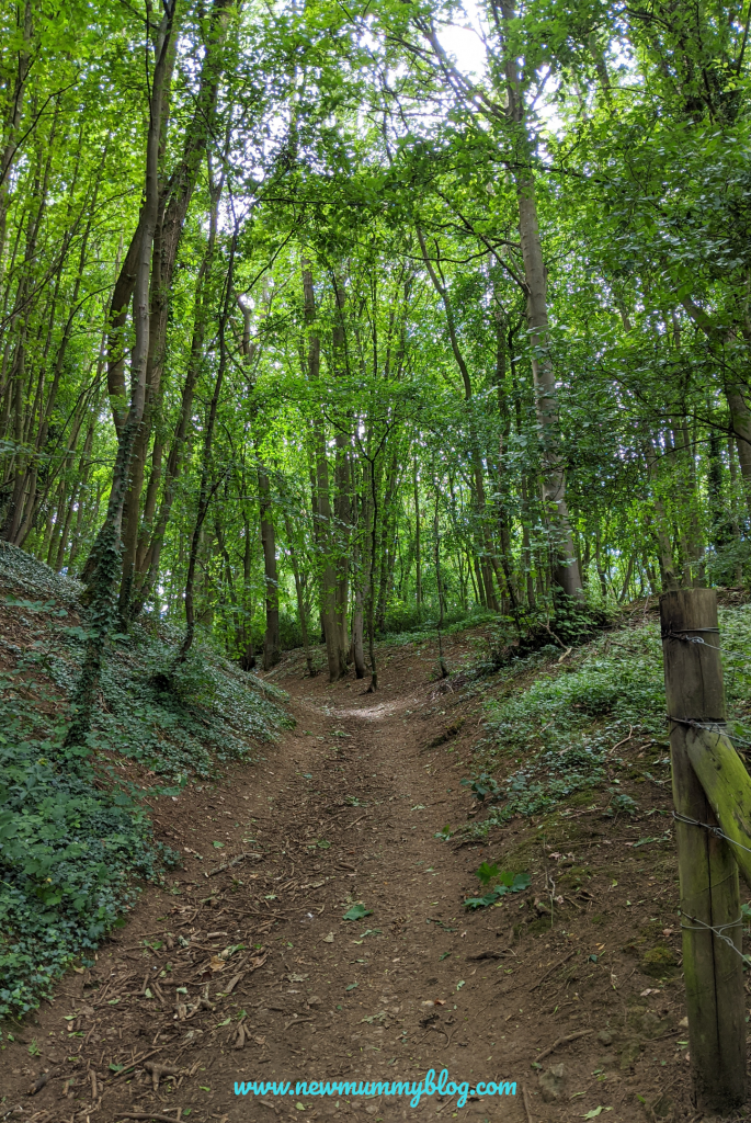 Local Family Walks near Cheltenham Gloucestershire. Days out and fun things to do with the kids near Cheltenham. Woodland with rough path uphill near the Bela's Knap parking area.